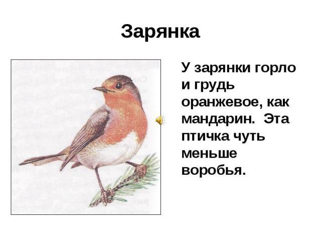 Зарянка У зарянки горло и грудь оранжевое, как мандарин. Эта птичка чуть меньше воробья.
