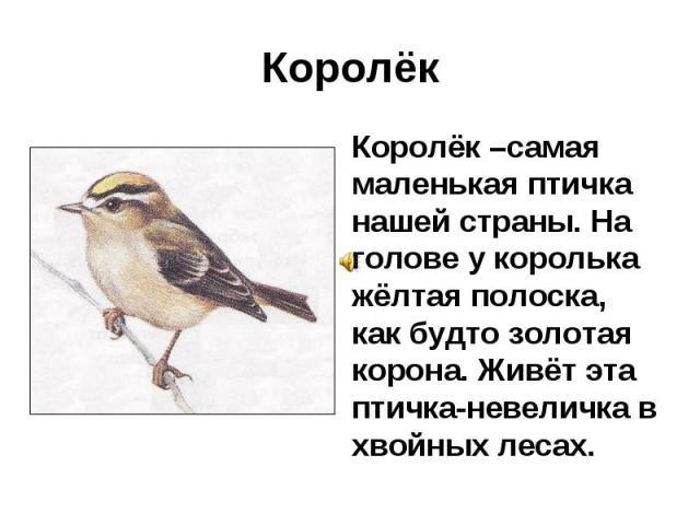 Королёк Королёк –самая маленькая птичка нашей страны. На голове у королька жёлтая полоска, как будто золотая корона. Живёт эта птичка-невеличка в хвойных лесах.
