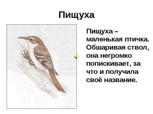 Пищуха Пищуха – маленькая птичка. Обшаривая ствол, она негромко попискивает, за что и получила своё название.