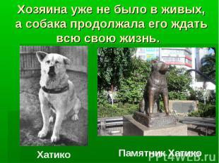 Хозяина уже не было в живых, а собака продолжала его ждать всю свою жизнь. Хатик