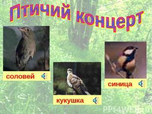 Птичий концерт