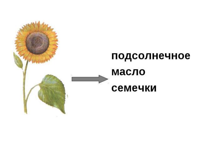 подсолнечное масло семечки