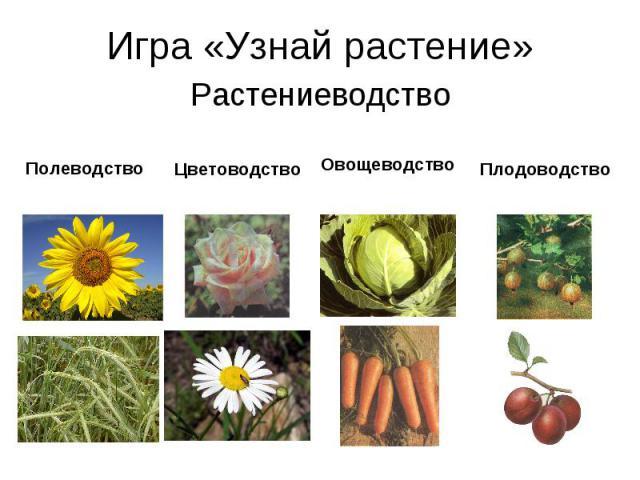 Игра «Узнай растение»