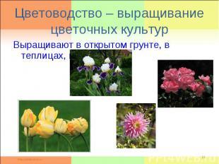 Цветоводство – выращивание цветочных культурВыращивают в открытом грунте, в тепл