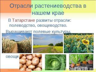 Отрасли растениеводства в нашем крае В Татарстане развиты отрасли: полеводство,