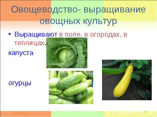 Овощеводство- выращивание овощных культурВыращивают в поле, в огородах, в теплицах. капуста кабачки огурцы