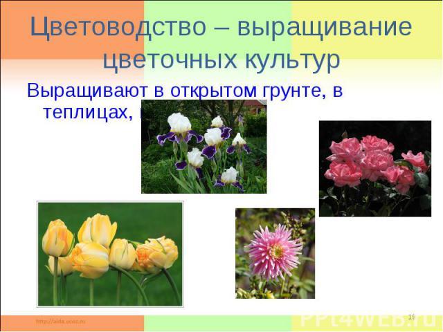 Цветоводство – выращивание цветочных культурВыращивают в открытом грунте, в теплицах, в комнатах.