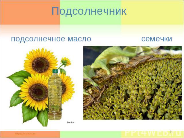Подсолнечник подсолнечное масло семечки