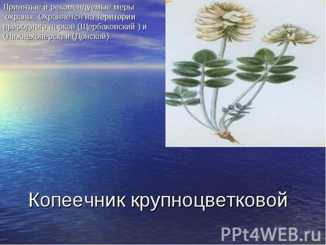 Принятые и рекомендуемые меры охраны. Охраняется на територии природного парков (Щербаковский ) и (Нижнехоперск) и (Донской). Копеечник крупноцветковой