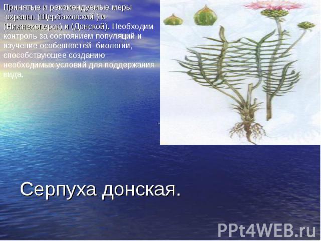 Принятые и рекомендуемые меры охраны. (Щербаковский ) и (Нижнехоперск) и (Донской). Необходим контроль за состоянием популяций и изучение особенностей биологии, способствующее созданию необходимых условий для поддержания вида. Серпуха донская.