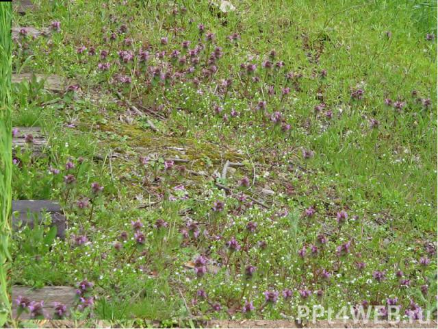 Мозаичность травянистого покрова.