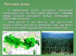 Лесная зона В умеренном поясе находятся несколько природных зон. Из них самая ши
