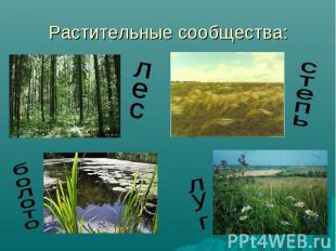 Растительные сообщества: лес болото степь луг