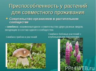 Приспособленность у растений для совместного проживанияСожительство организмов в