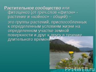 Растительное сообщество или фитоценоз (от греч.слов «фитон» - растение и «койнос