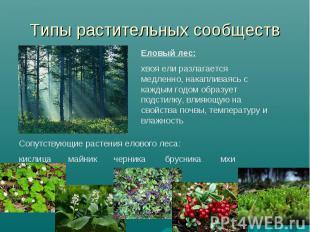 Типы растительных сообществ Еловый лес: хвоя ели разлагается медленно, накаплива