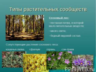 Типы растительных сообществ Сосновый лес: песчаная почва, в которой мало питател