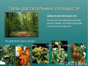 Типы растительных сообществ Широколиственный лес: почвы богаты минеральными веще
