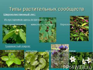 Типы растительных сообществШироколиственный лес: Из кустарников здесь встречаютс