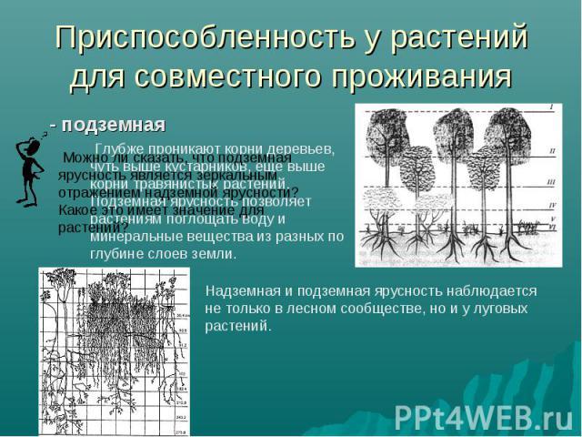 Приспособленность у растений для совместного проживания - подземная Можно ли сказать, что подземная ярусность является зеркальным отражением надземной ярусности? Какое это имеет значение для растений? Надземная и подземная ярусность наблюдается не т…