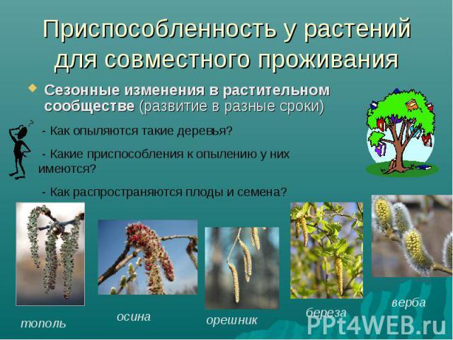 Приспособленность у растений для совместного проживанияСезонные изменения в растительном сообществе (развитие в разные сроки) - Как опыляются такие деревья? - Какие приспособления к опылению у них имеются? - Как распространяются плоды и семена?
