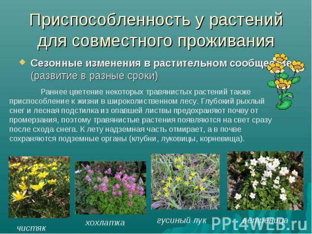Приспособленность у растений для совместного проживанияСезонные изменения в растительном сообществе (развитие в разные сроки) Раннее цветение некоторых травянистых растений также приспособление к жизни в широколиственном лесу. Глубокий рыхлый снег и…