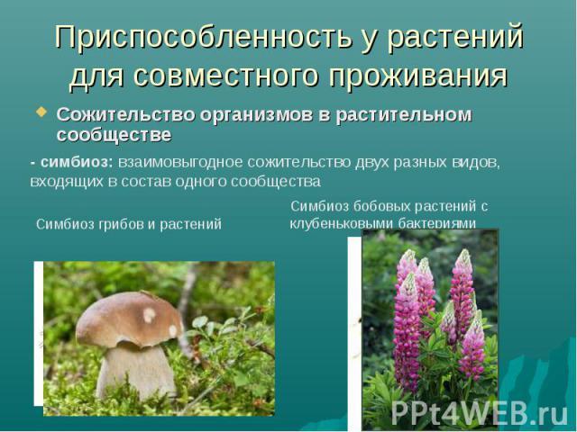 Приспособленность у растений для совместного проживанияСожительство организмов в растительном сообществе - симбиоз: взаимовыгодное сожительство двух разных видов, входящих в состав одного сообщества Симбиоз бобовых растений с клубеньковыми бактериям…