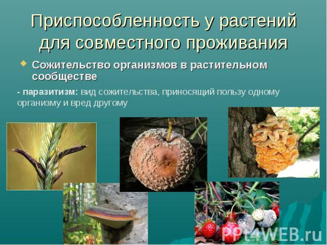 Приспособленность у растений для совместного проживанияСожительство организмов в растительном сообществе - паразитизм: вид сожительства, приносящий пользу одному организму и вред другому