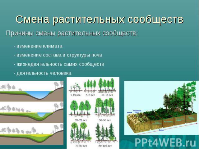 Смена растительных сообществ Причины смены растительных сообществ: изменение климата изменение состава и структуры почв жизнедеятельность самих сообществ деятельность человека