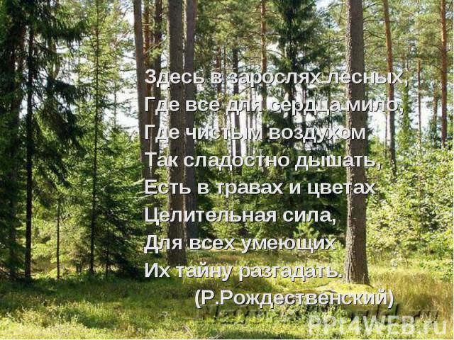 Здесь в зарослях лесных, Где все для сердца мило, Где чистым воздухом Так сладостно дышать, Есть в травах и цветах Целительная сила, Для всех умеющих Их тайну разгадать. (Р.Рождественский)