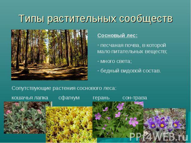 Типы растительных сообществ Сосновый лес: песчаная почва, в которой мало питательных веществ; много света; бедный видовой состав. Сопутствующие растения соснового леса: кошачья лапка сфагнум герань сон-трава