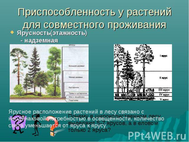 Приспособленность у растений для совместного проживанияЯрусность(этажность) - надземная Ярусное расположение растений в лесу связано с неодинаковой потребностью в освещенности, количество света уменьшается от яруса к ярусу. Почему в широколиственном…