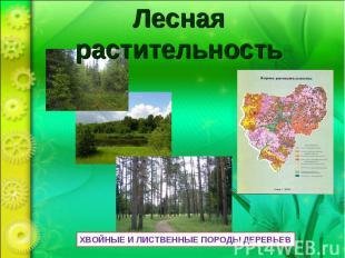 Лесная растительность ХВОЙНЫЕ И ЛИСТВЕННЫЕ ПОРОДЫ ДЕРЕВЬЕВ