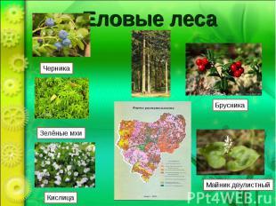 Еловые лесаЧерника Зелёные мхи Кислица Брусника Майник двулистный