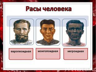 Расы человека европеоидная монголоидная негроидная