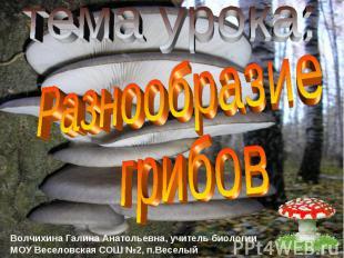 тема урока: Разнообразие грибов Волчихина Галина Анатольевна, учитель биологии М
