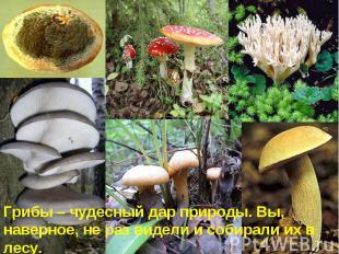 Грибы – чудесный дар природы. Вы, наверное, не раз видели и собирали их в лесу.