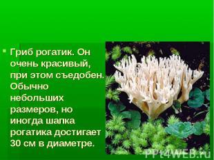 Многоклеточные грибы Гриб рогатик. Он очень красивый, при этом съедобен. Обычно