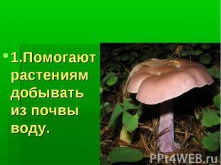 Значение грибов: 1.Помогают растениям добывать из почвы воду.