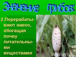 Значение грибов: 2.Перерабаты-вают навоз, обогащая почву питательны-ми веществам