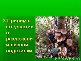 Значение грибов: 3.Принима-ют участие в разложении лесной подстилки