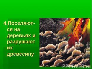Значение грибов: 4.Поселяют-ся на деревьях и разрушают их древесину