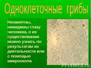 Одноклеточные грибы Незаметны, невидимы глазу человека, о их существовании можно