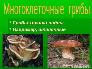 Многоклеточные грибы Грибы хорошо видны Например, шляпочные