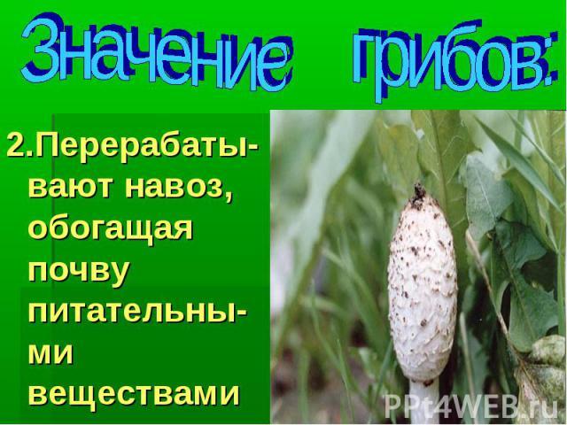 Значение грибов: 2.Перерабаты-вают навоз, обогащая почву питательны-ми веществами