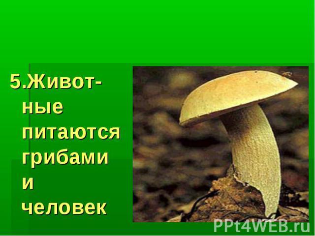 Значение грибов: 5.Живот-ные питаются грибами и человек