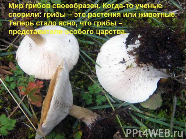 Мир грибов своеобразен. Когда-то ученые спорили: грибы – это растения или животные. Теперь стало ясно, что грибы – представители особого царства.
