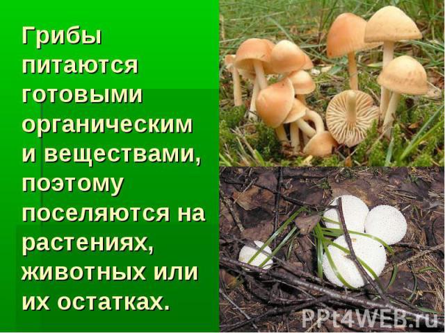 Грибы питаются готовыми органическими веществами, поэтому поселяются на растениях, животных или их остатках.