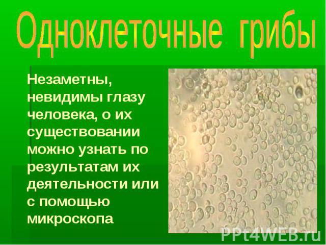 Одноклеточные грибы Незаметны, невидимы глазу человека, о их существовании можно узнать по результатам их деятельности или с помощью микроскопа