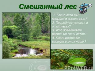Смешанный лес 1. Какие леса мы называем смешанные? 2. Природные условия в этих л